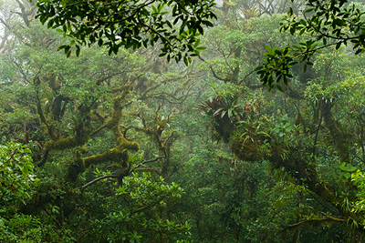 A View Of The Cloud Forest Canopy In Monteverde Costa Rica